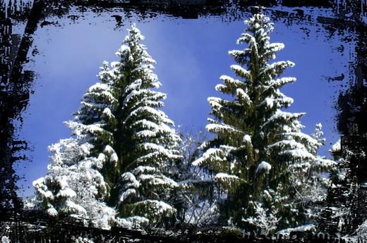 winter_2baeume_520px